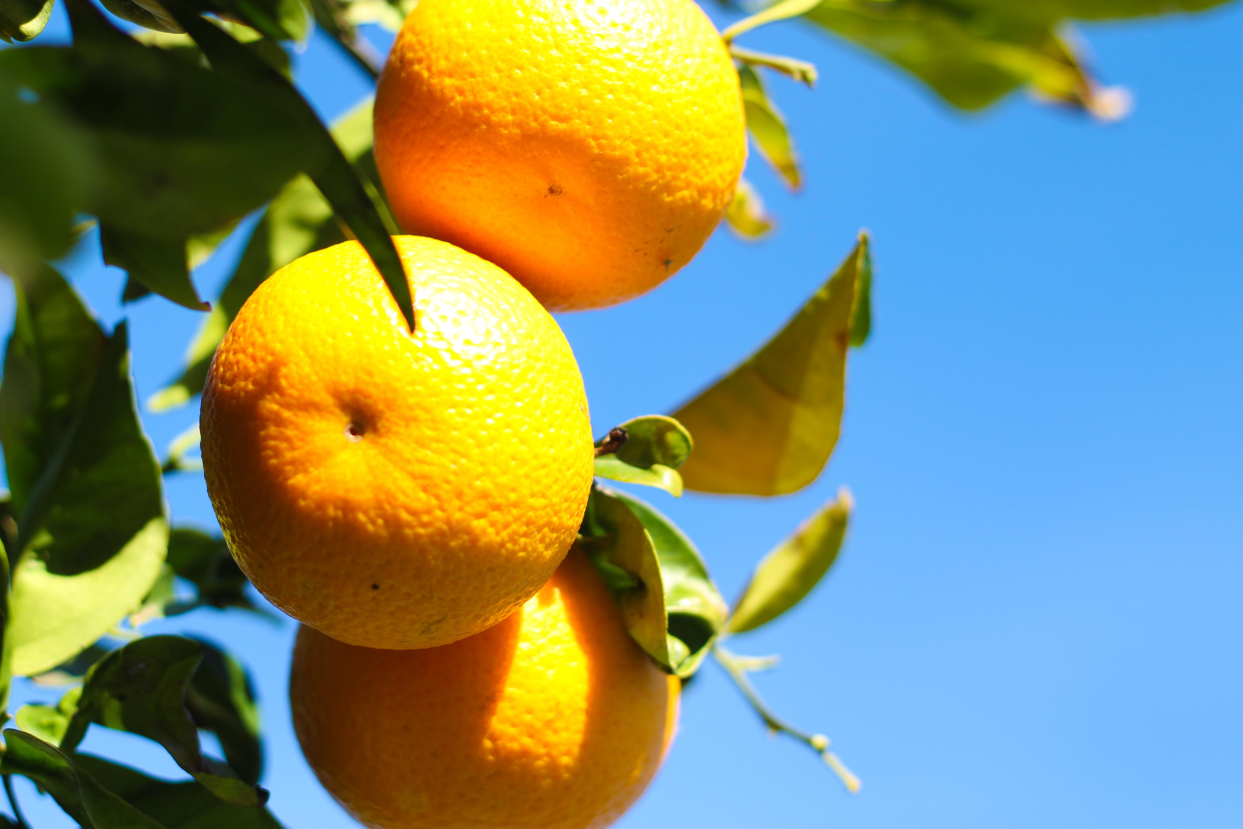 ibiza oranges